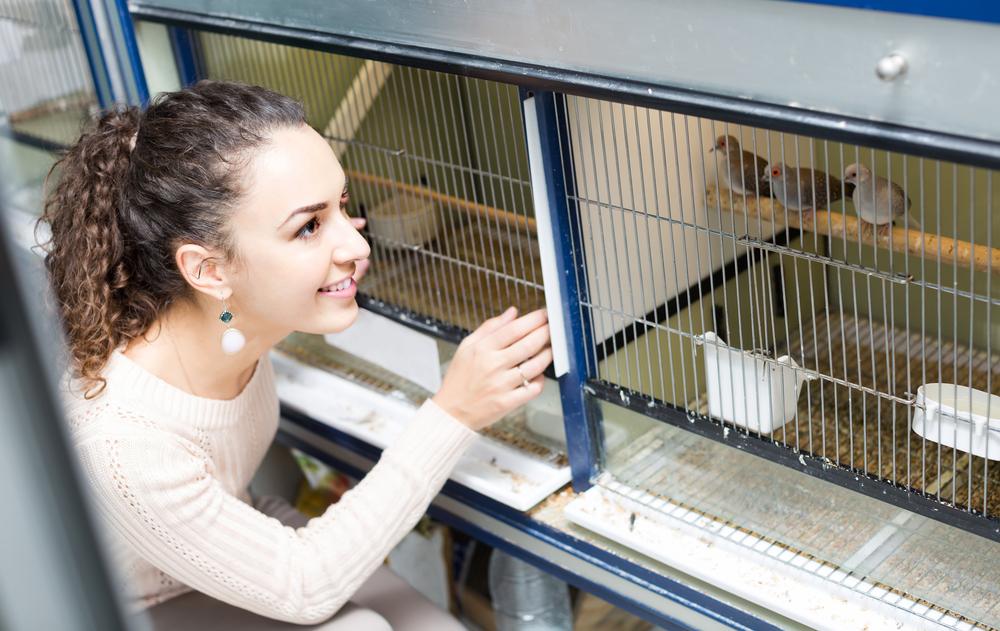 شراء طائر جديد اقتناء الحيوانات الاليفة