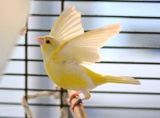 greenfinch-mutation-e1524549540369.jpg